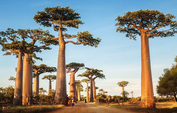 Países que no piden visa a los colombianos Madagascar