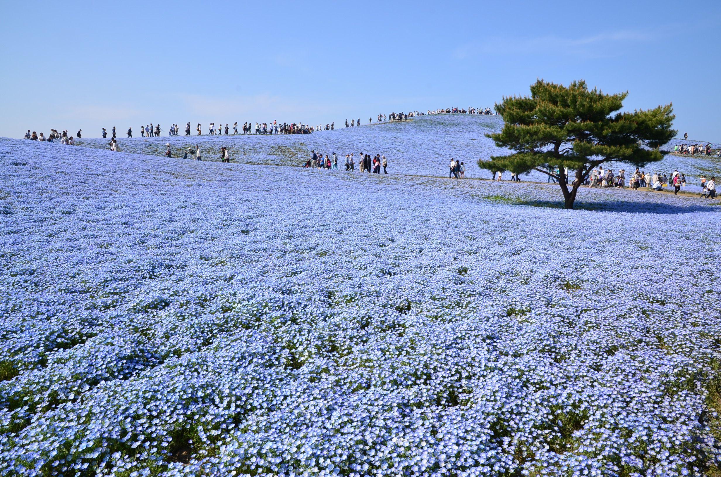 Lugares exóticos del mundo - Parque Hitachi