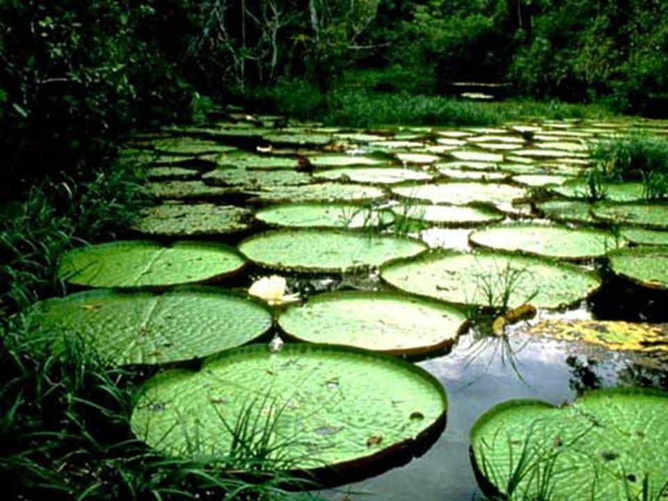 Viajar por el sur de Colombia - Lago Yahuarcacas