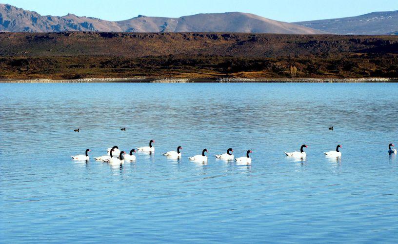 Tour por La Patagonia Argentina - Neuquen