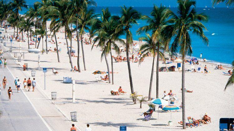 10 días en Miami - Palmeras