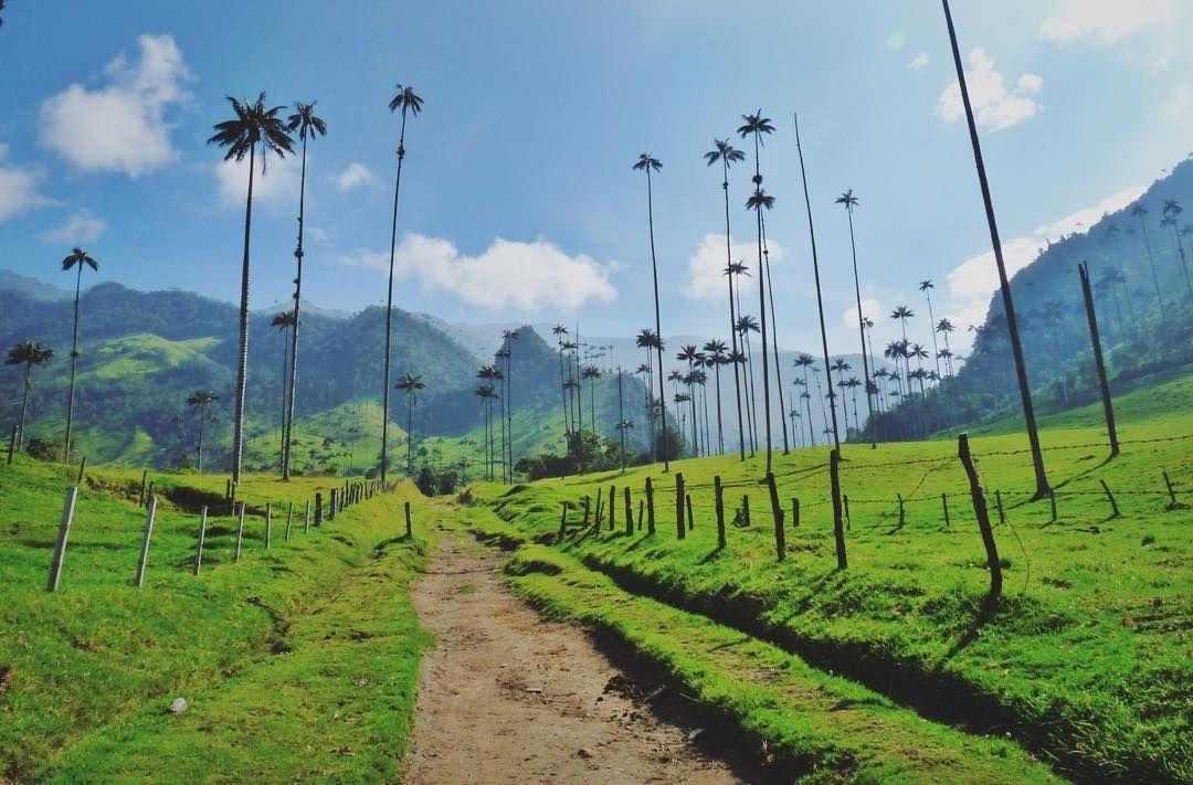 Trekking en Colombia - Valle del Cocora