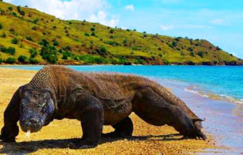 Destinos internacionales más baratos para viajar - Komodo Dragons