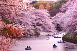 Lugares exóticos del mundo - Cherry blossom