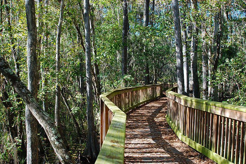 Recorrer-la-costa-de-Florida - Everglades