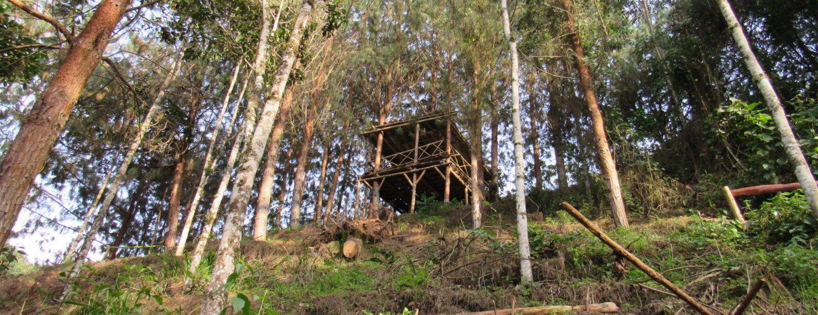 Pasar la noche en Colombia - Entre Pinos – Manizales, Caldas