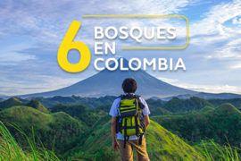 Seis bosques en Colombia para conocer
