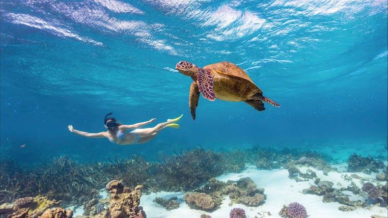 donde ver el color del año - coral bay australia